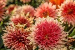 Blommor i botanisk trädgård Fotografering för Bildbyråer
