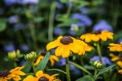 Blommor i botanisk trädgård Arkivfoton