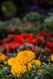Blommor i botanisk trädgård Royaltyfri Foto