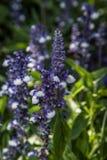 Blommor i botanisk trädgård Royaltyfria Bilder