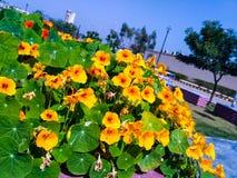 Blommor i dagsljuset Arkivfoton