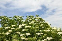 Blommor i danskalandskap i sommaren Arkivbilder