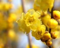 Blommor i December Royaltyfria Foton