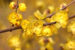 Blommor i December Royaltyfri Bild