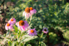 Blommor i den Indianapolis zoo arkivbilder