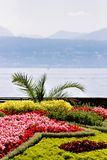 Blommor i den Ouchy byn på sjöGenèveinvallning i Lausanne Fotografering för Bildbyråer