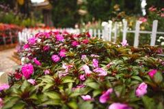 Blommor i den trädgårds- Dalaten Fotografering för Bildbyråer
