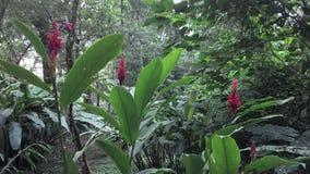 Blommor i djungel Royaltyfri Bild