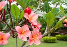 Blommor i Doi Saket Arkivbild