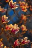 Blommor i Dresden Arkivfoton