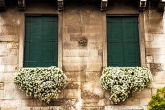 Blommor i en ask på fönstret Venetian facade royaltyfri bild