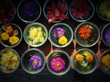 Blommor i en bunke med solljus Arkivfoton