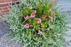 Blommor i en buske på gatan Arkivbilder