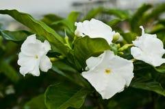 Blommor i en djungel Arkivfoto