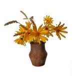 Blommor i en gammal lerakruka Arkivfoton