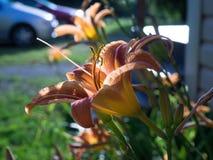 Blommor i en grupp Arkivfoton