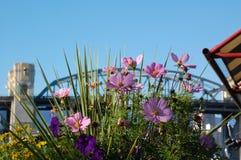 Blommor i en kruka framme av en bro Arkivfoto