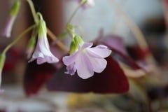 Blommor i en kruka på fönsterbrädan Arkivfoton