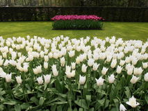Blommor i en parkera Royaltyfria Foton