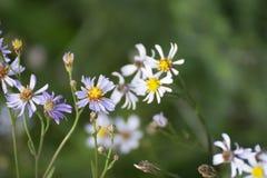 Blommor i en ro Fotografering för Bildbyråer