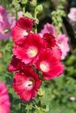 Blommor i en trädgård Fotografering för Bildbyråer