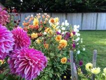 Blommor i en trädgård Royaltyfri Foto
