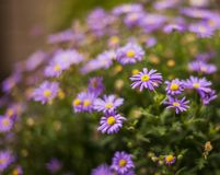 Blommor i en trädgård i London - en solig dag, sommar 2018 arkivbilder