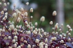 Blommor i en tropisk gård arkivfoton