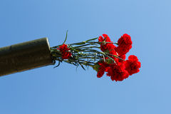 Blommor i en vapenstam Arkivfoton