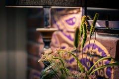 Blommor i ett kafé nära en tegelstenvägg arkivfoto