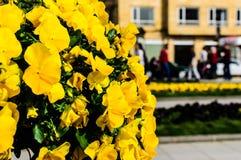 Blommor i ett offentligt parkerar av den Yalova staden - Turkiet Royaltyfri Foto