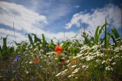 Blommor i fältet Royaltyfria Bilder