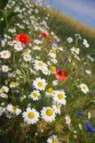 Blommor i fältet Arkivbilder