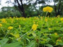 Blommor i fältet Arkivbild