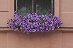 Blommor i fönstret Arkivbild