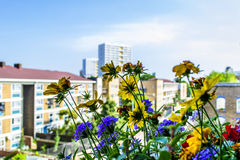 Blommor i förgrund och byggnader i bakgrund Arkivfoton