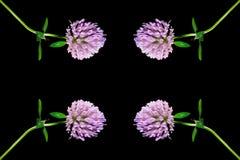 Blommor i förgrunden på en svart bakgrund Royaltyfria Bilder