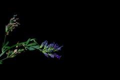 Blommor i förgrunden på en svart bakgrund Fotografering för Bildbyråer