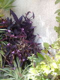 Blommor i fjäder Arkivfoto