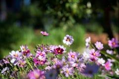 Blommor i fjäder royaltyfri fotografi