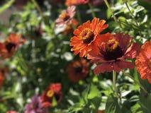 Blommor i fj?der royaltyfri fotografi
