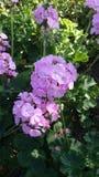 Blommor i florapark Royaltyfri Fotografi