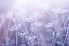 Blommor i frosten med en försiktig morgon tänder royaltyfria foton