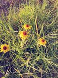 Blommor i gräset Arkivfoton