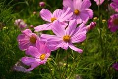 Blommor i gräsmattan Royaltyfri Fotografi