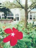 Blommor i gradenen Royaltyfri Bild