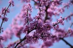 Blommor i Granbury Texas March 17 Royaltyfri Fotografi