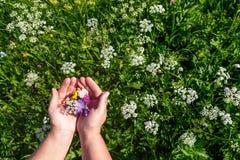 Blommor i händer arkivbilder