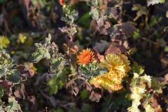 Blommor i höst Arkivbild