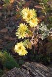 Blommor i höst Arkivfoton